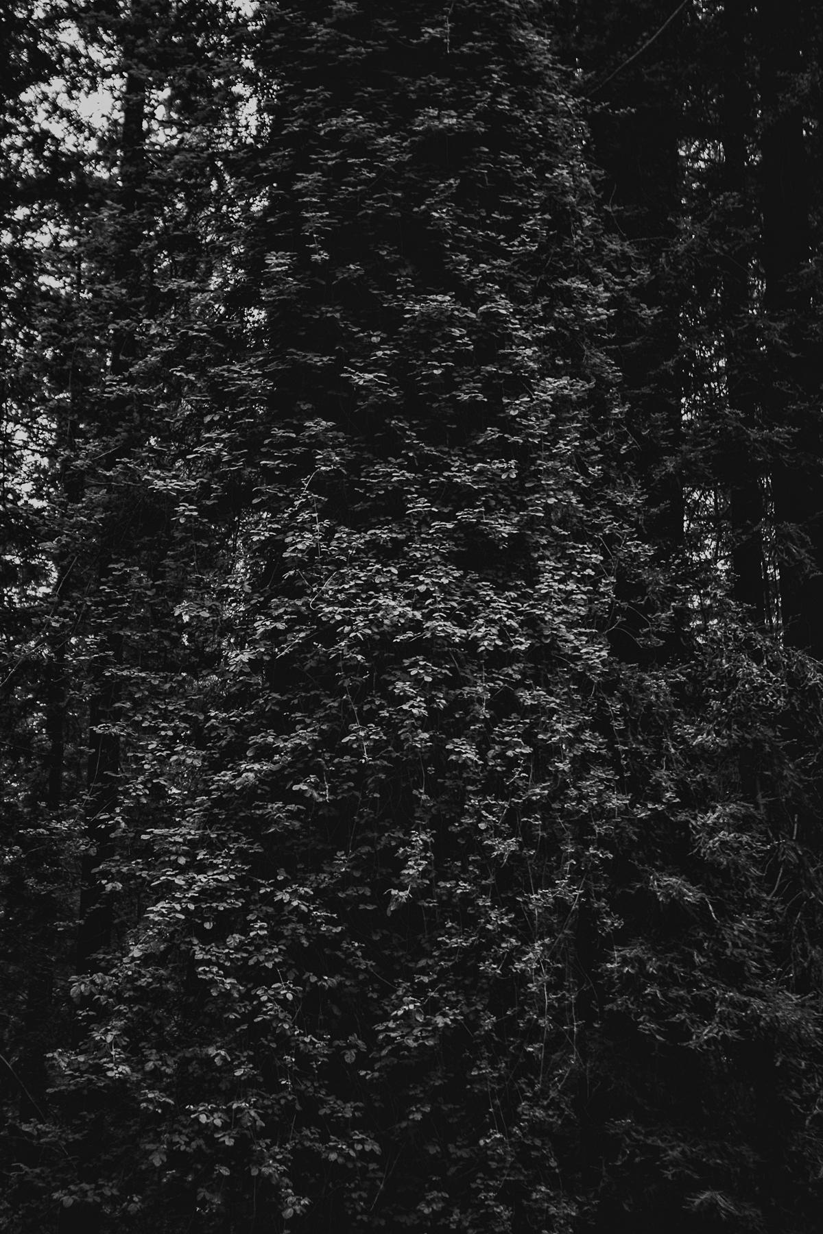 Poison Oak shroud