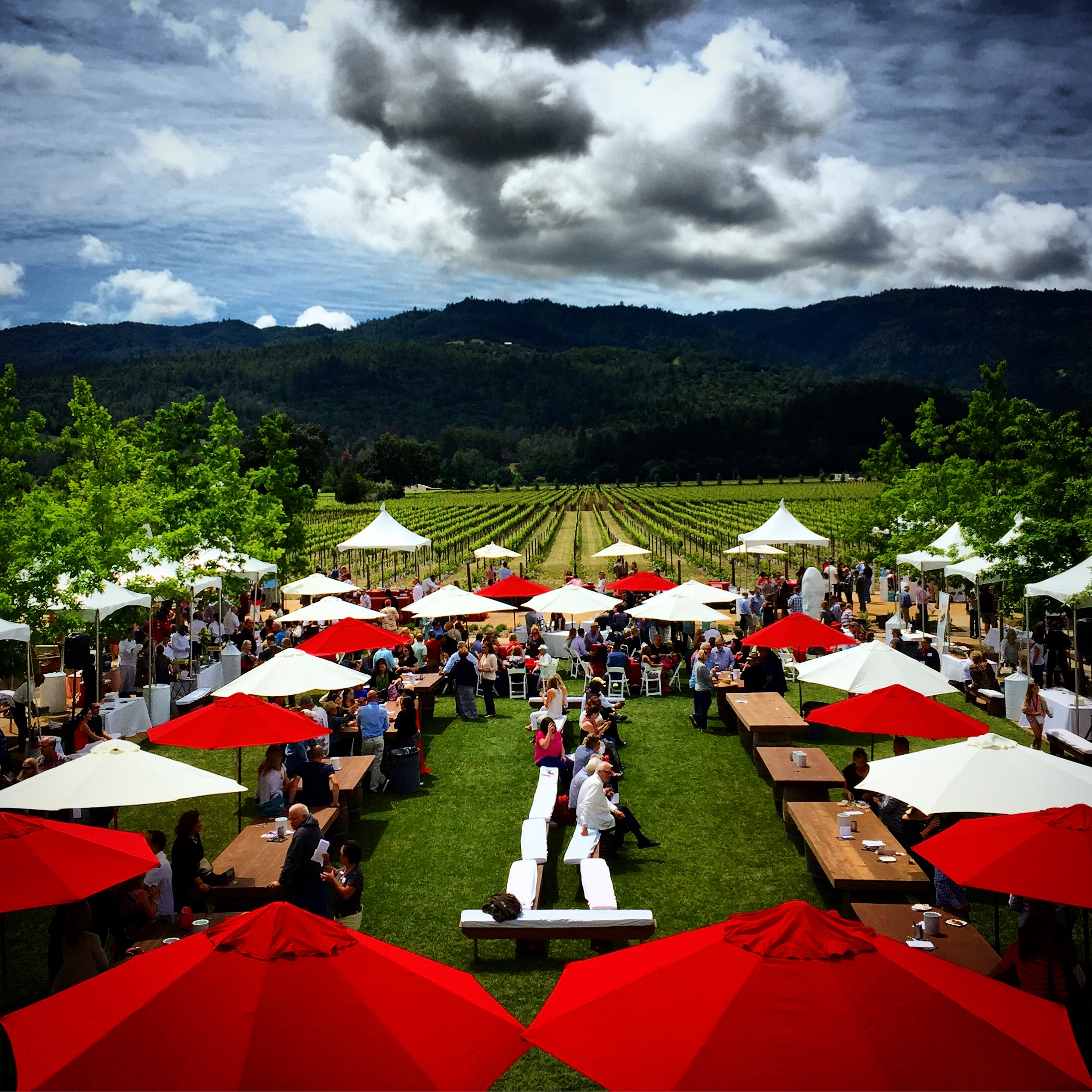 Several hundred people participated in the annual Hall Winery Cab Cookoff in Napa. Such a fun event under sunny skies.