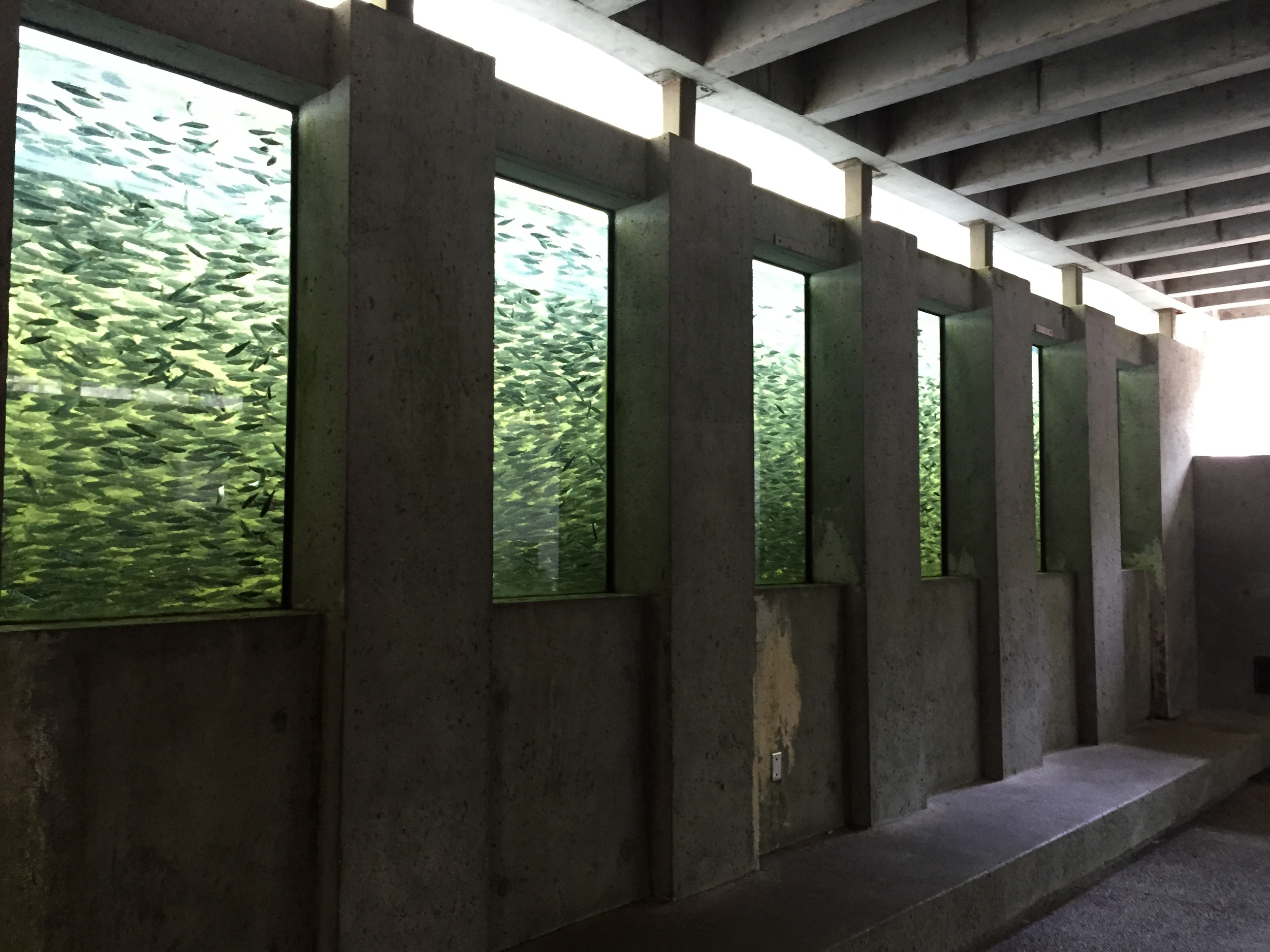 Toward the last 1/3 of our hike we were able to check out the salmon hatchery!  Photo: The Vancouverite