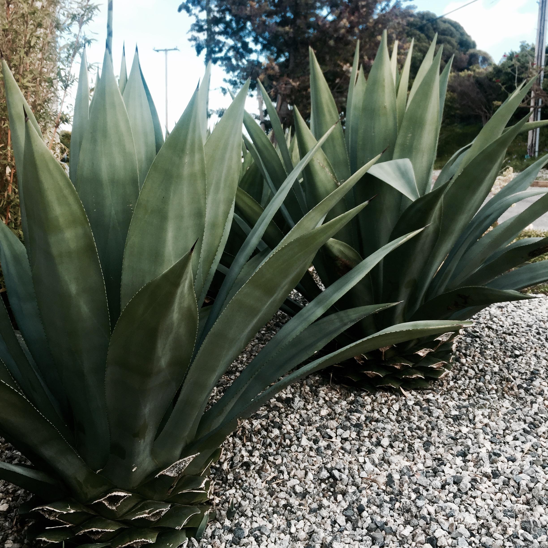 I love these desert plants.