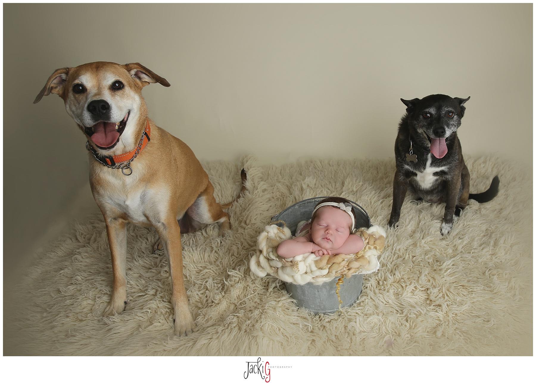 doggiesiblings