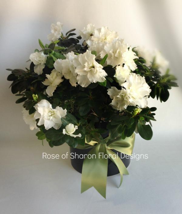 White Azalea, Rose of Sharon Floral Designs