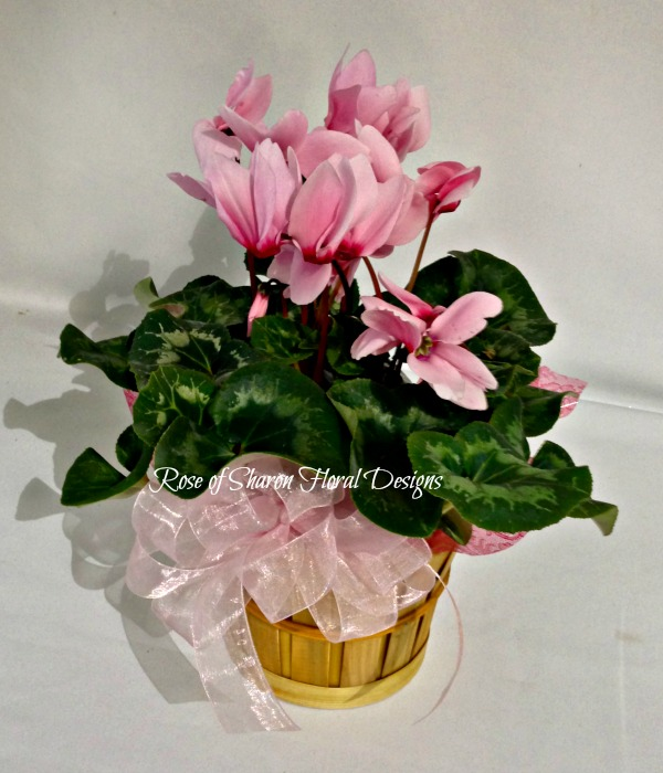 Pink Cyclamen, Rose of Sharon Floral Designs