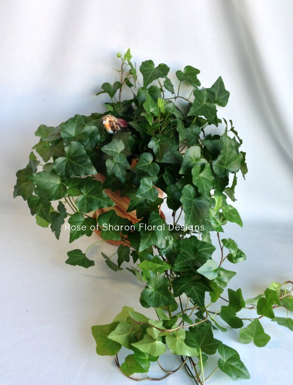 Ivy Plant with Bird Accent, Rose of Sharon Floral Designs