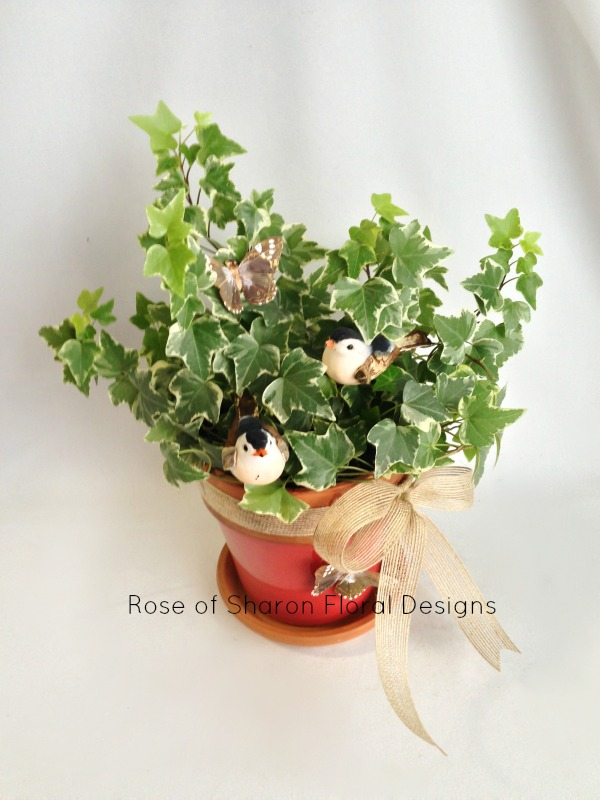 Ivy Plant with Bird and Butterfly Accents, Rose of Sharon Floral Designs