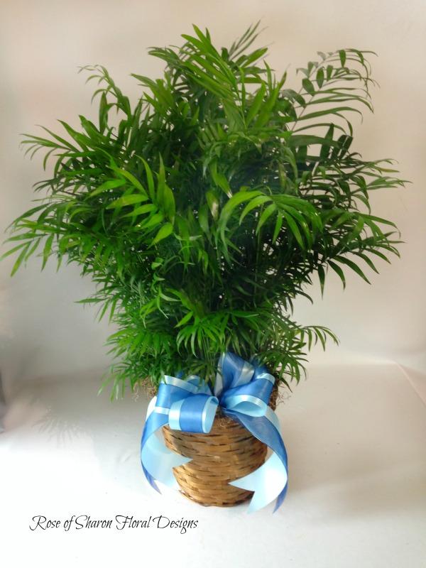 Palm, Rose of Sharon Floral Designs