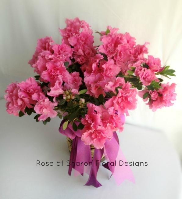 Pink Azalea, Rose of Sharon Floral Designs