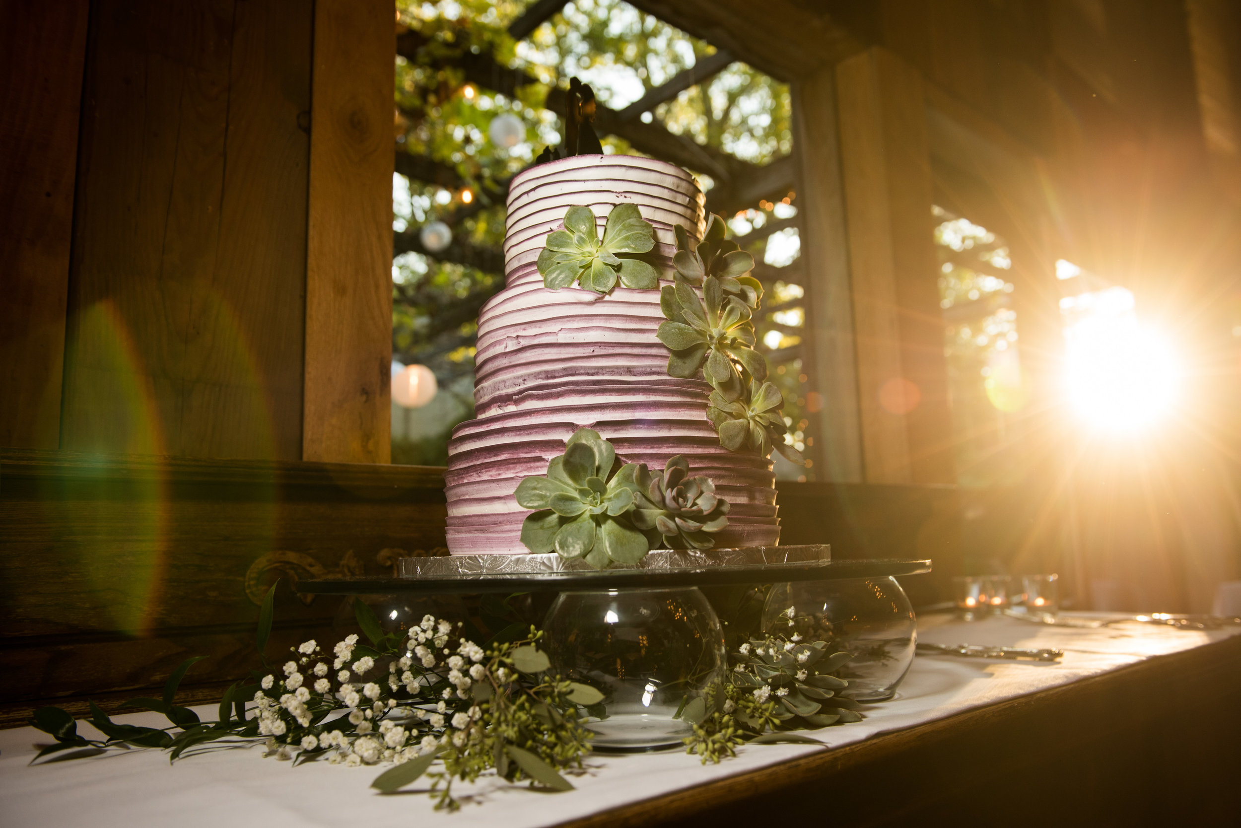 01. Succulent Cake. Jason Hudson Photography. The Garden Room. Rose of Sharon Floral Designs.jpg