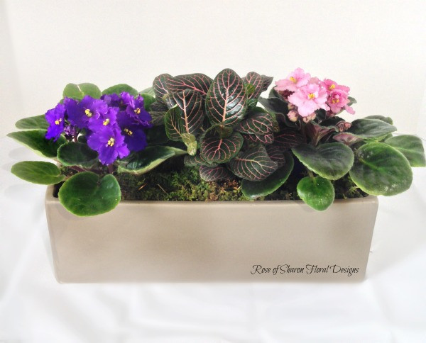 African Violet Mixed Planter