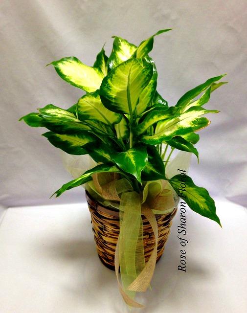 Plant-green-6.jpg