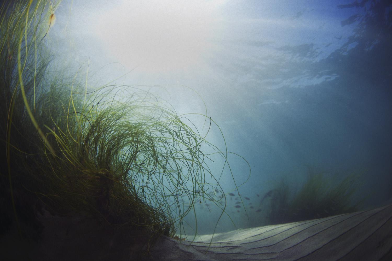 IMG_7573_SeagrassF.jpg