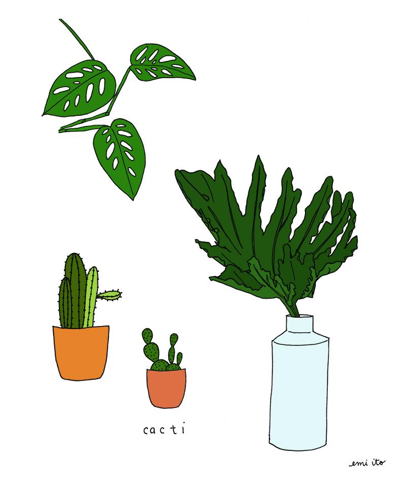 Cacti_Blog.jpg