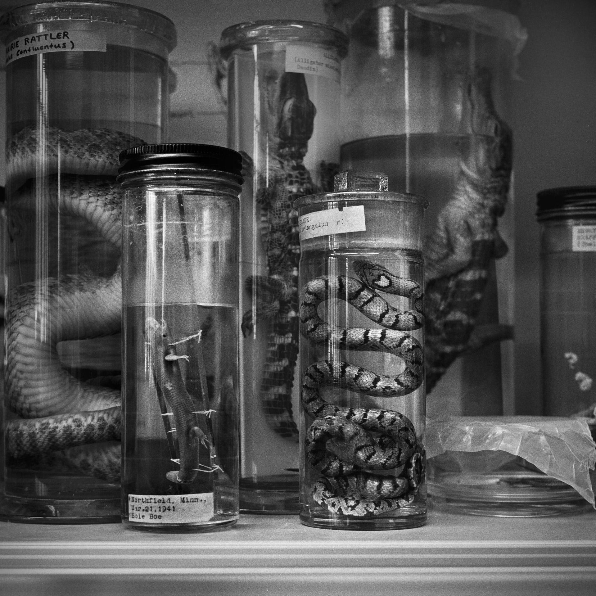 Preserved Reptiles