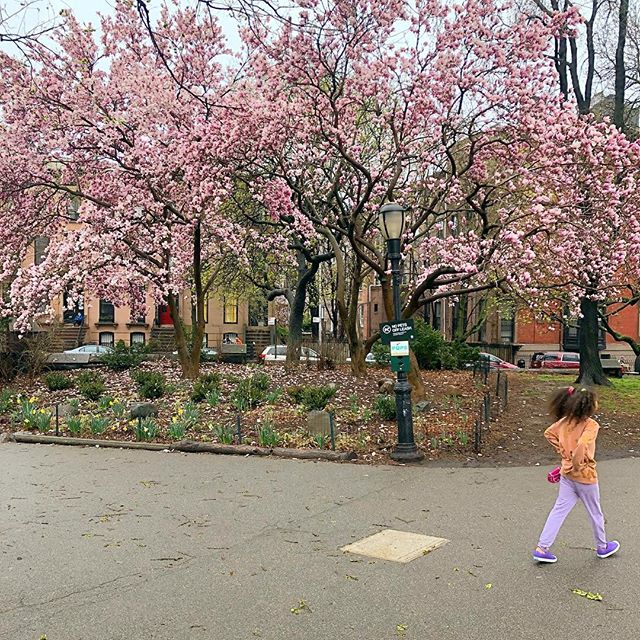 We woke up very happy. #spring in Brooklyn. A season of blooming and colorful things.