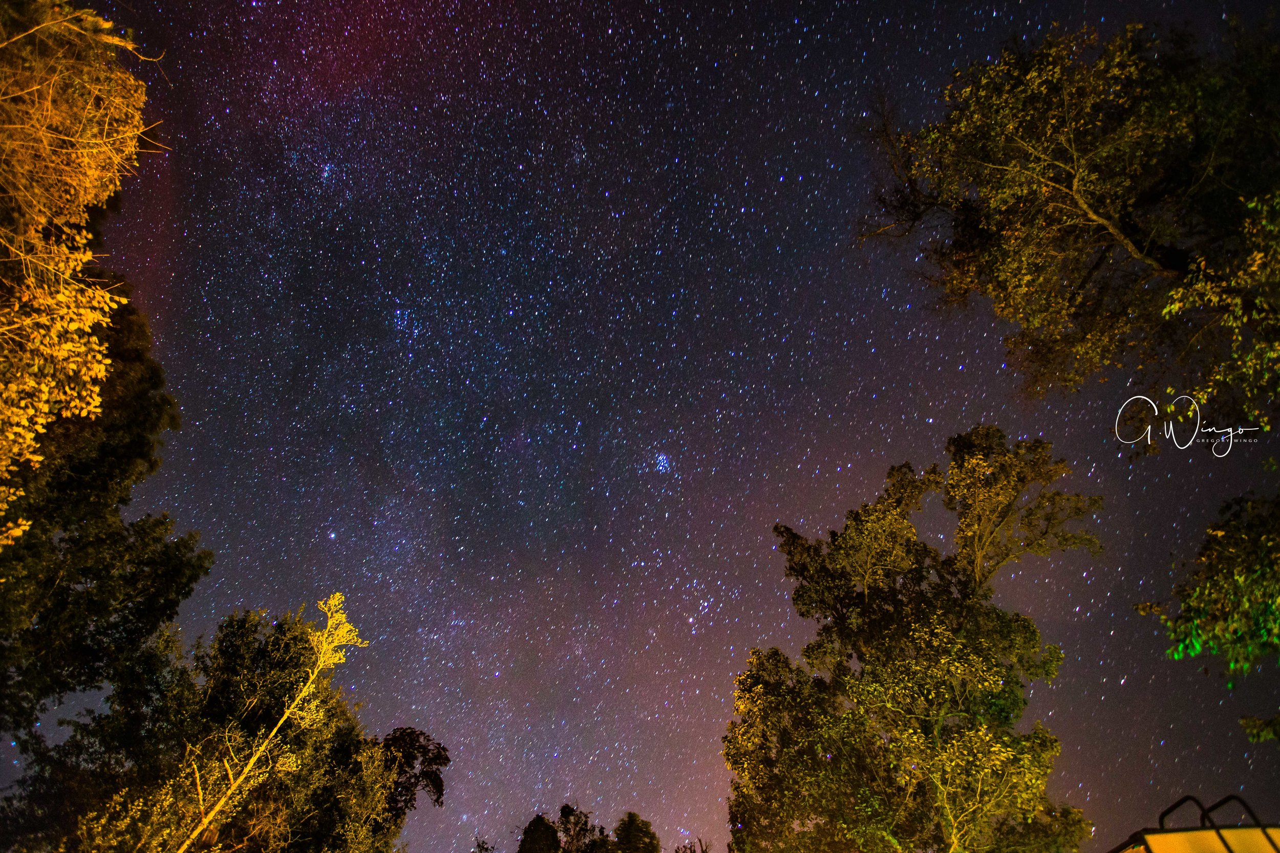 Martin Dies Jr. State Park - Milky Way