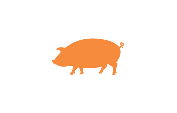 Tender_Belly_denver