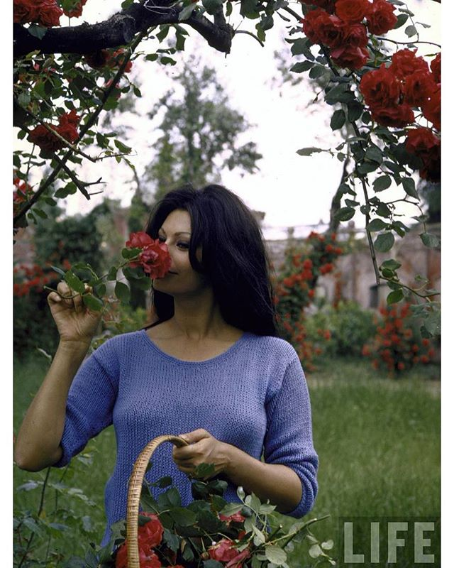Sophia Loren stopping to smell the roses, 1964🌹