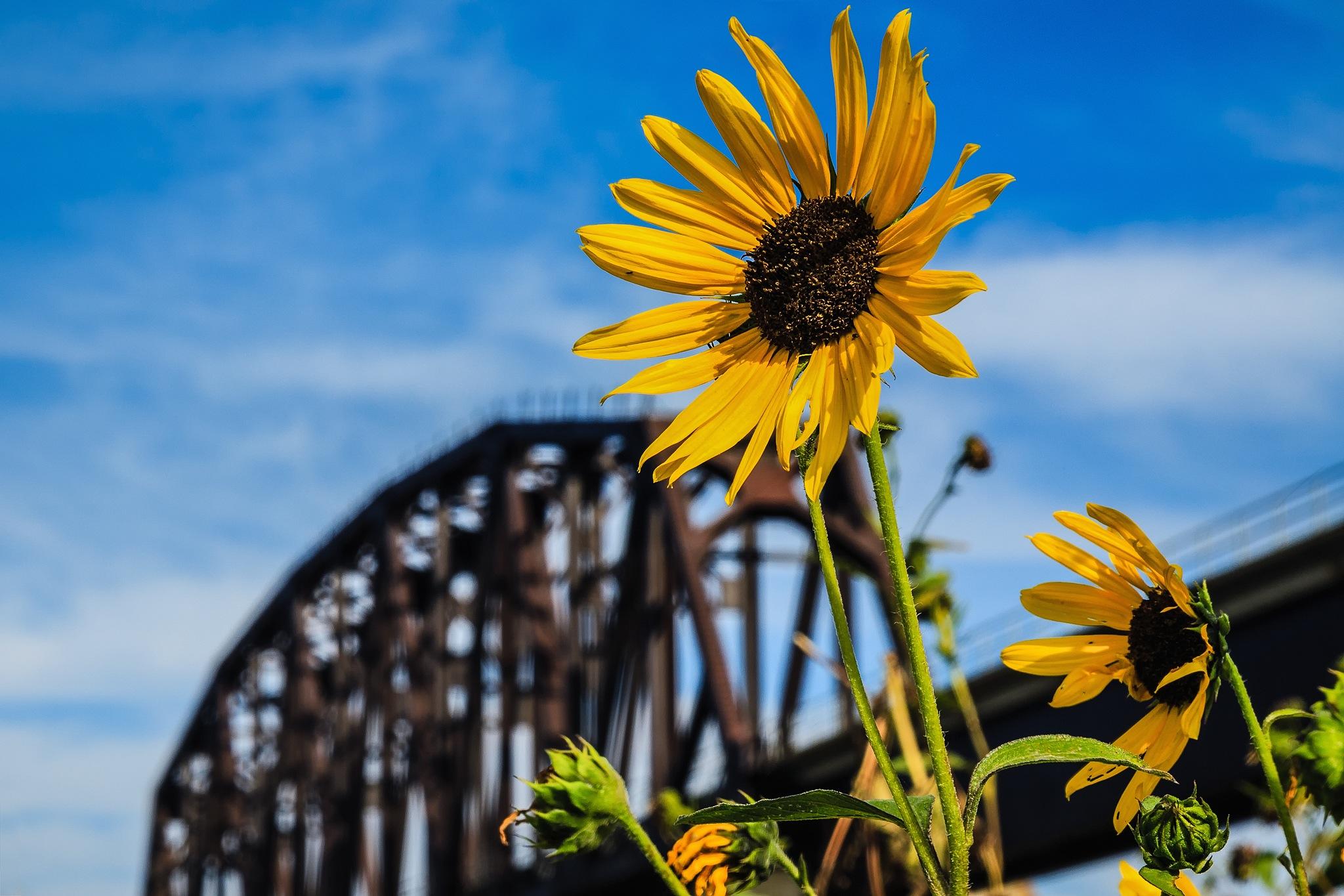 Flower Bridge.jpg