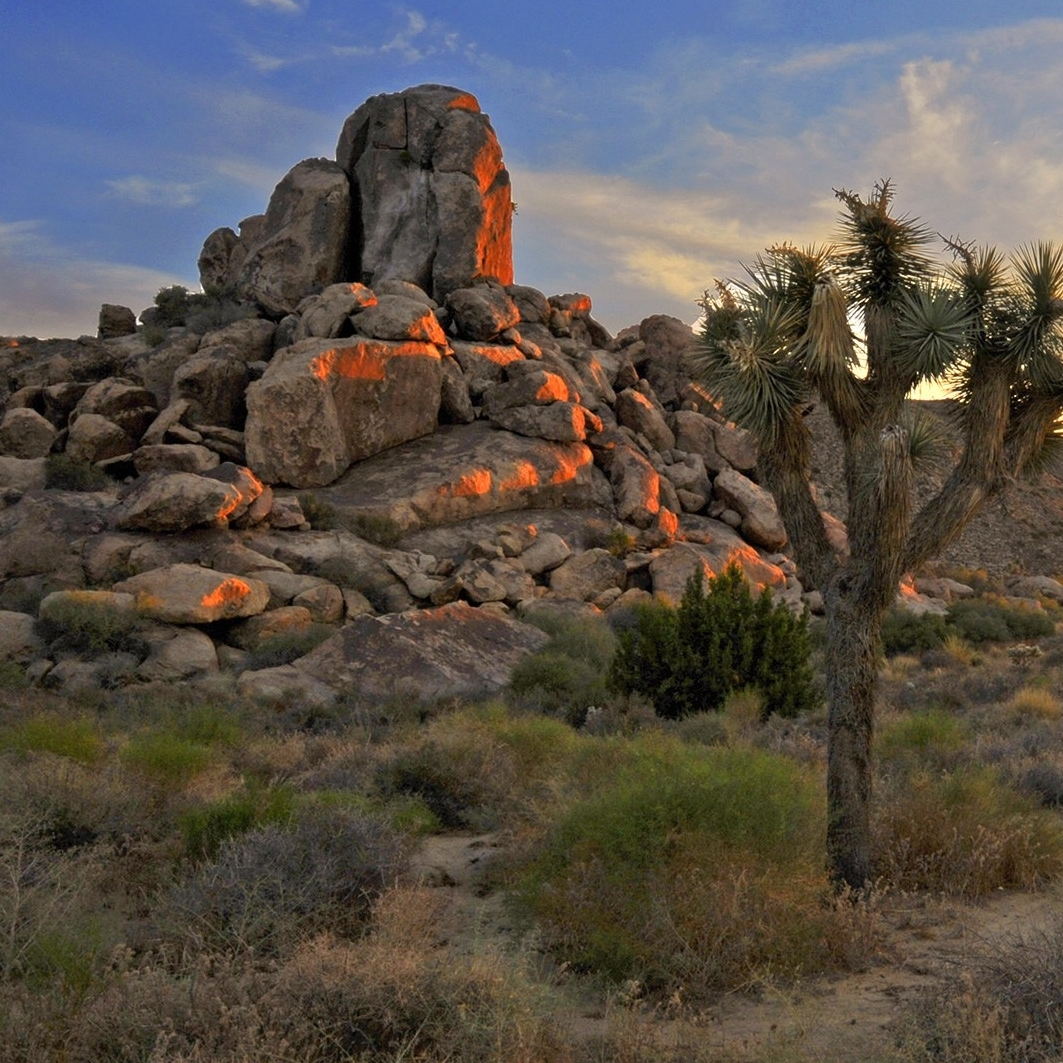 Wild Gathering Joshua Tree National Park   - September  12 - 16th | Joshua Tree, CA
