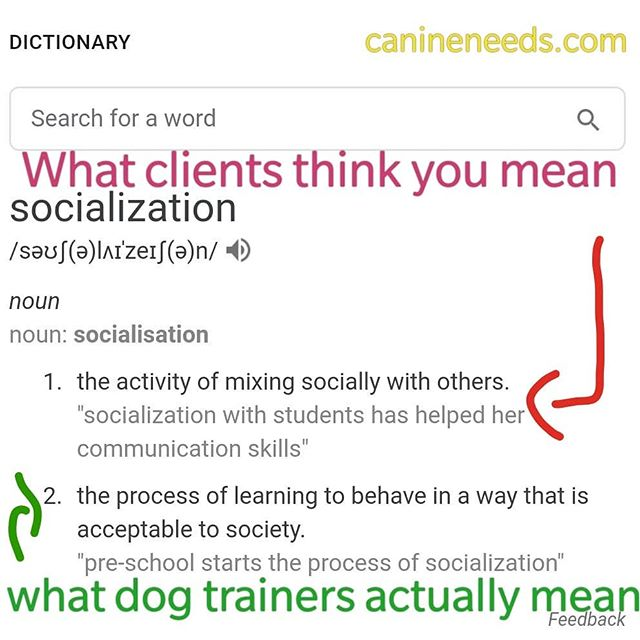 It's a confusing old world 😁😋 #puppysocialization #socialisation #puppytraining #London #dogtrainers