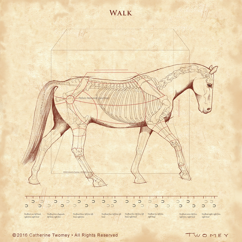 walk1500W.jpg