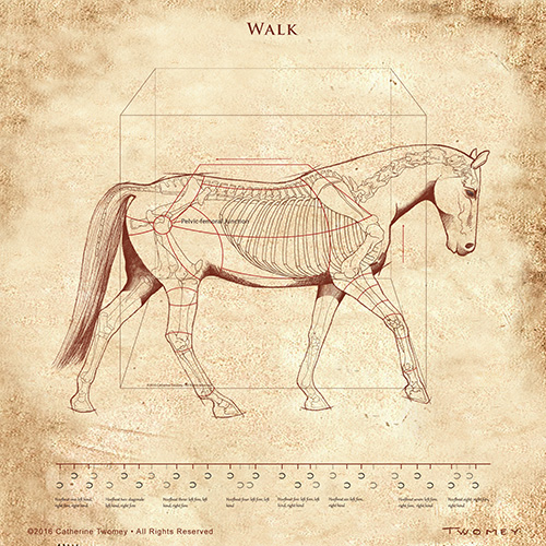 """The Horse's Walk Revealed"" by C. Twomey, ©2016"