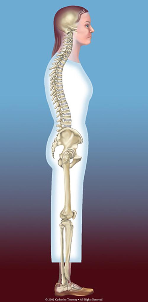 skeletalspinealignmen1500.jpg