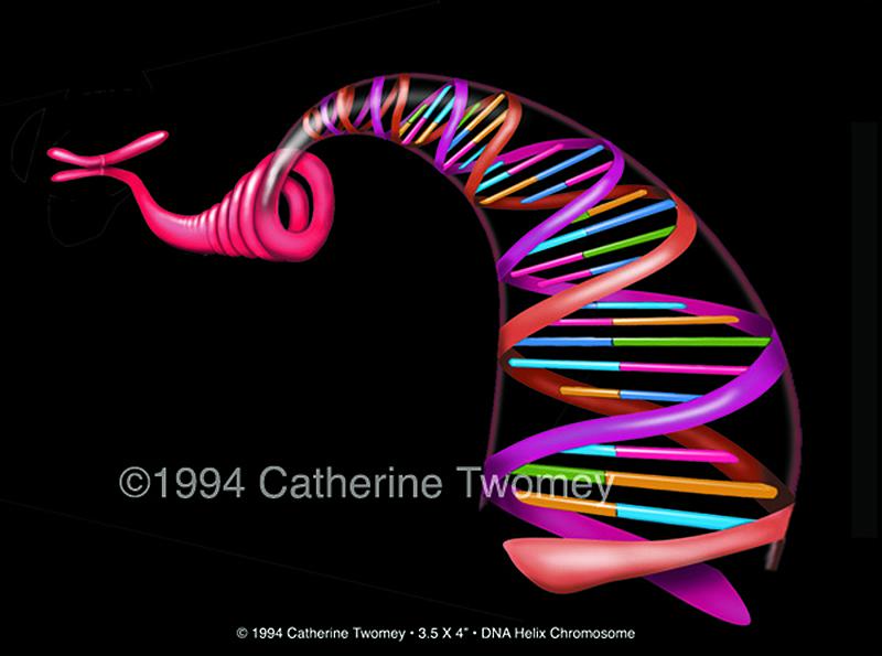 DNAhelixchromosome1500.jpg