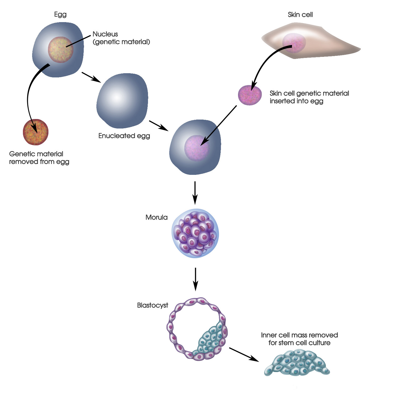 cellularstemcellcultivation21500.jpg