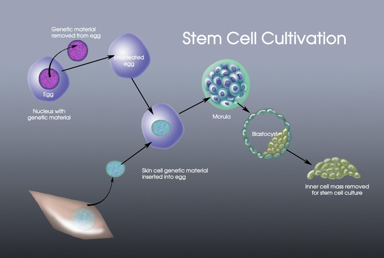 cellularstemcellscultivation1500.jpg