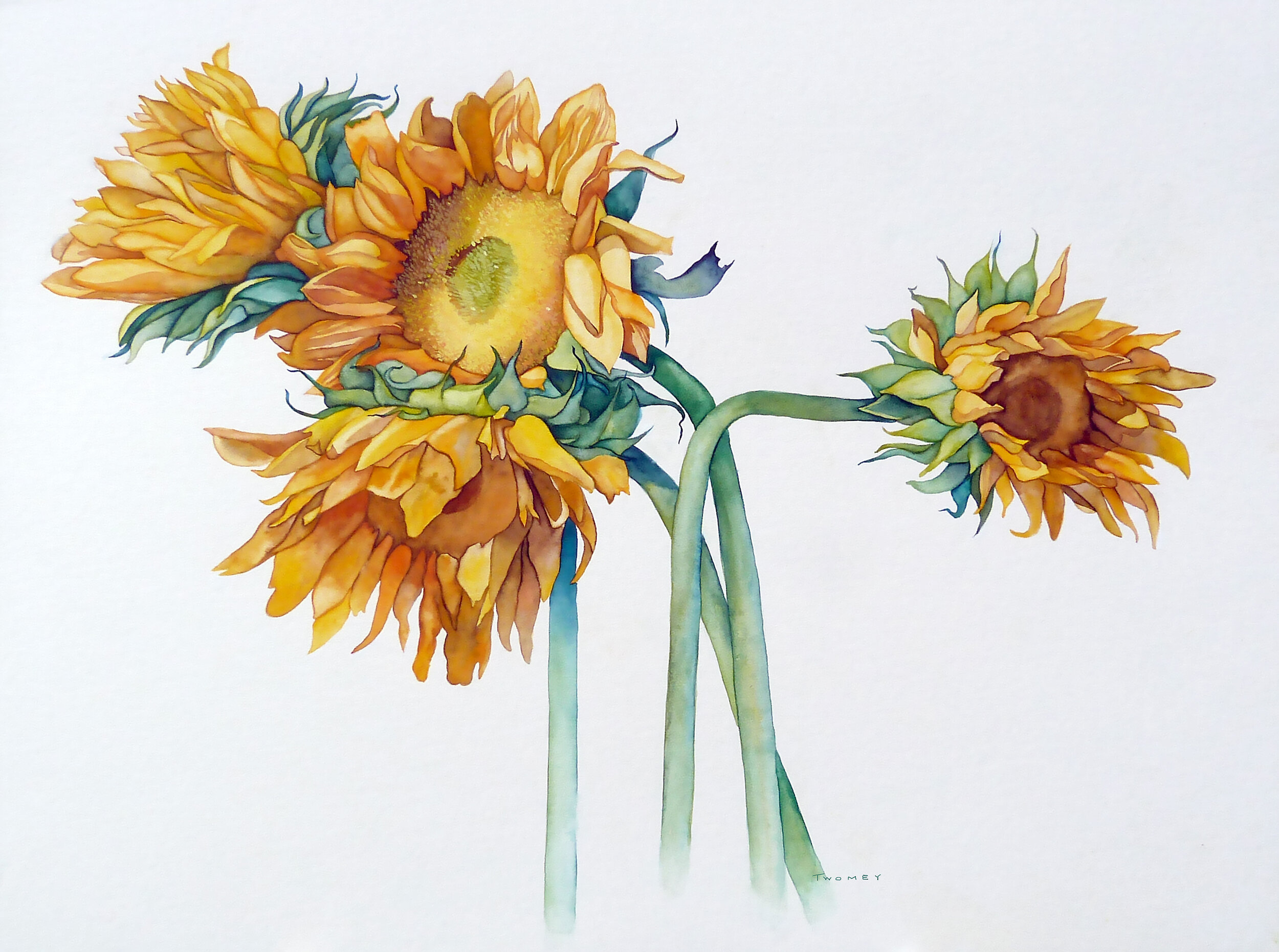 """Sunflower Quad"" watercolor, 15 X 20"" on Crescent board."