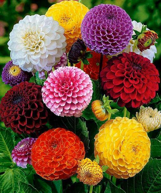 flowers.4.jpg