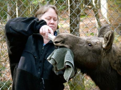 acadia_wildlife_foundation.jpg