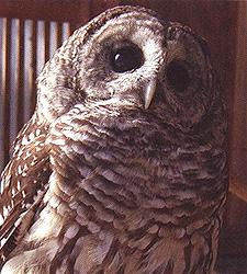 standwood_wildlife.jpg