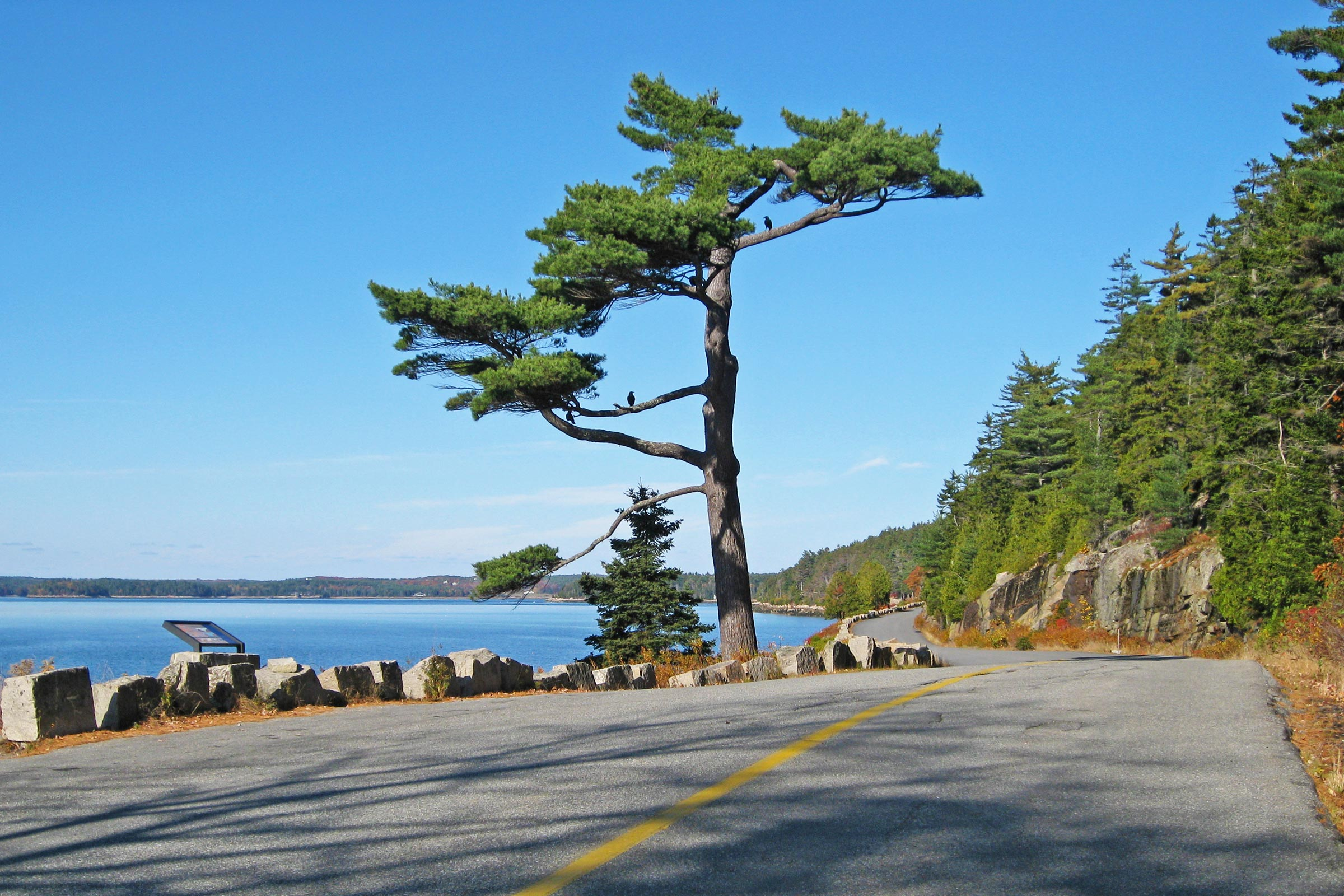 The MDI Marathon Tree