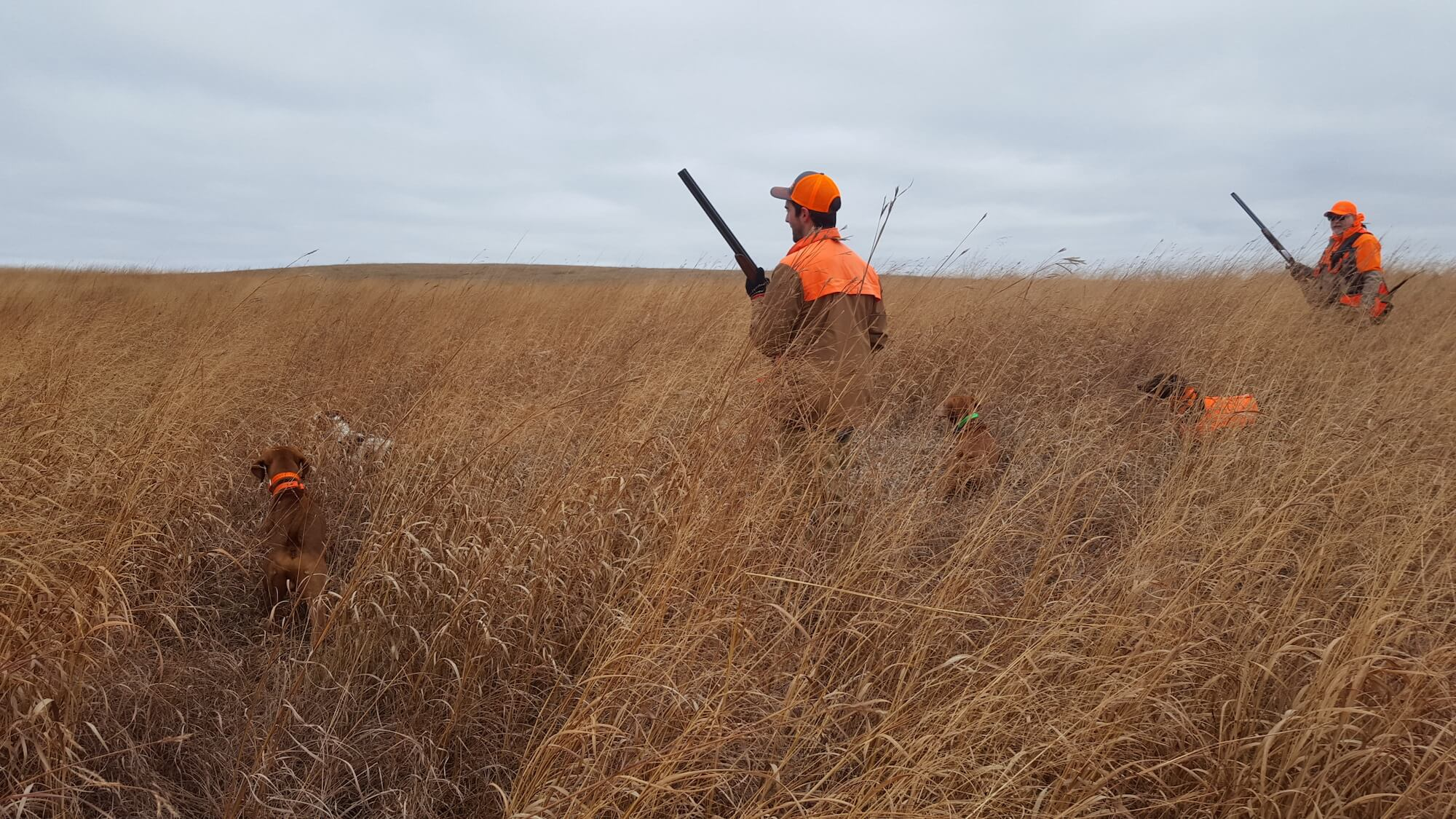 2018 Cimpl Made Hunts Pheasant Hunting South Dakota 3.jpg