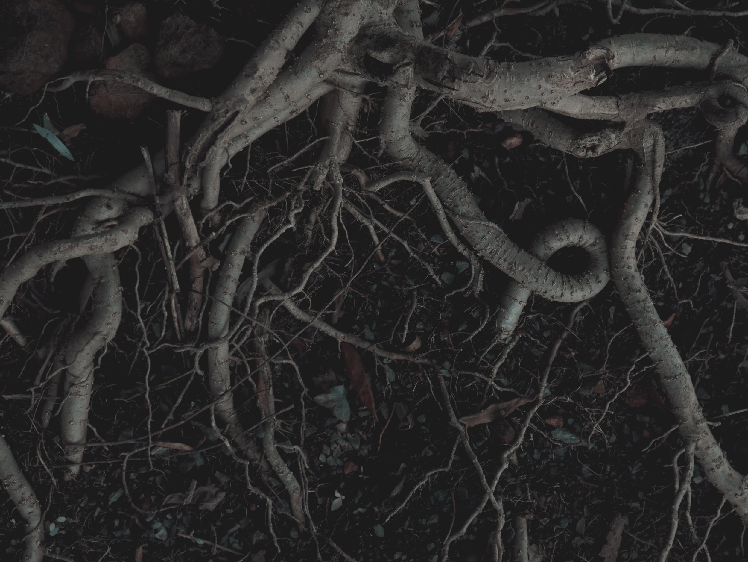 exposed roots.jpg