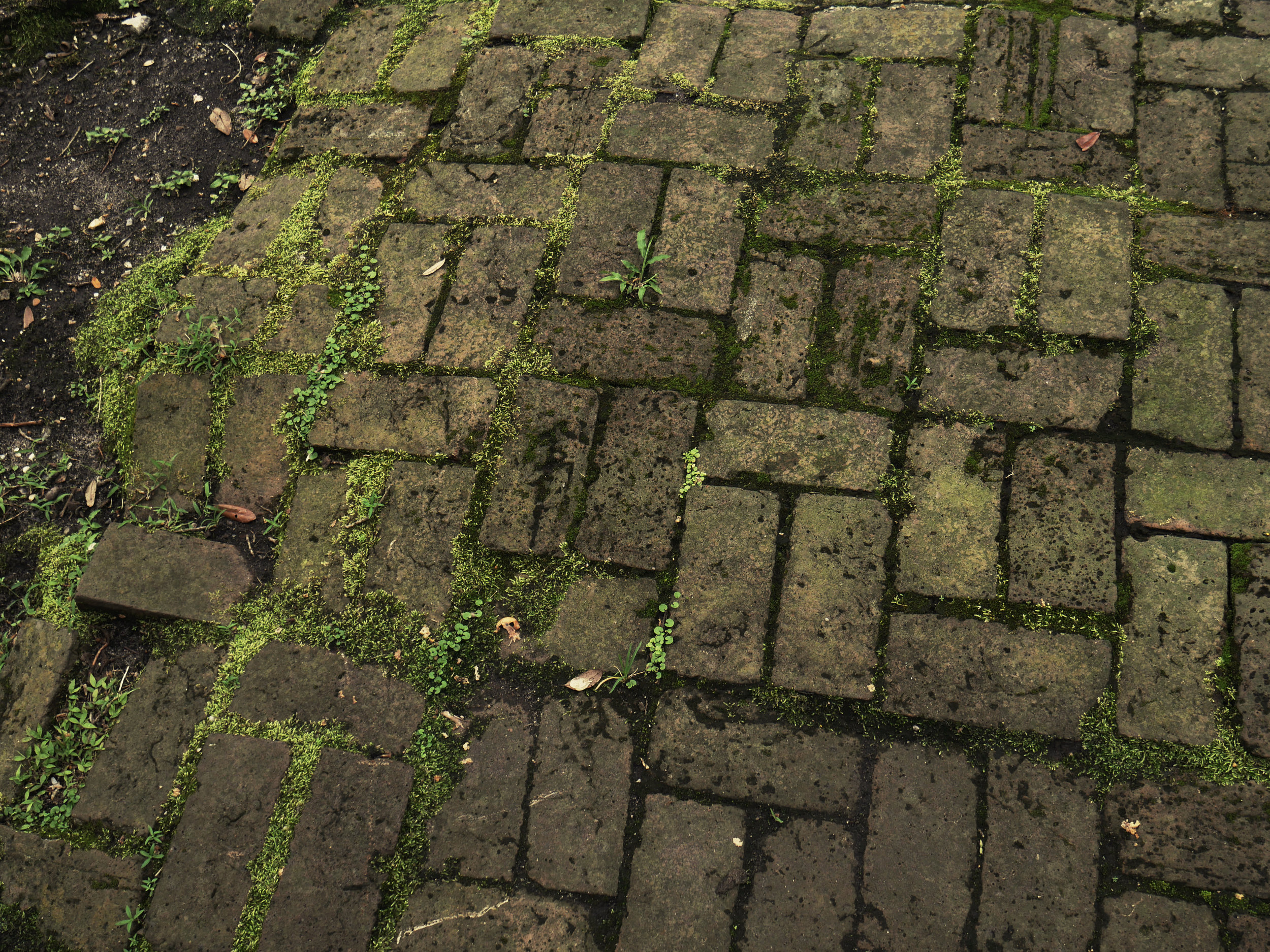 bricked.jpg