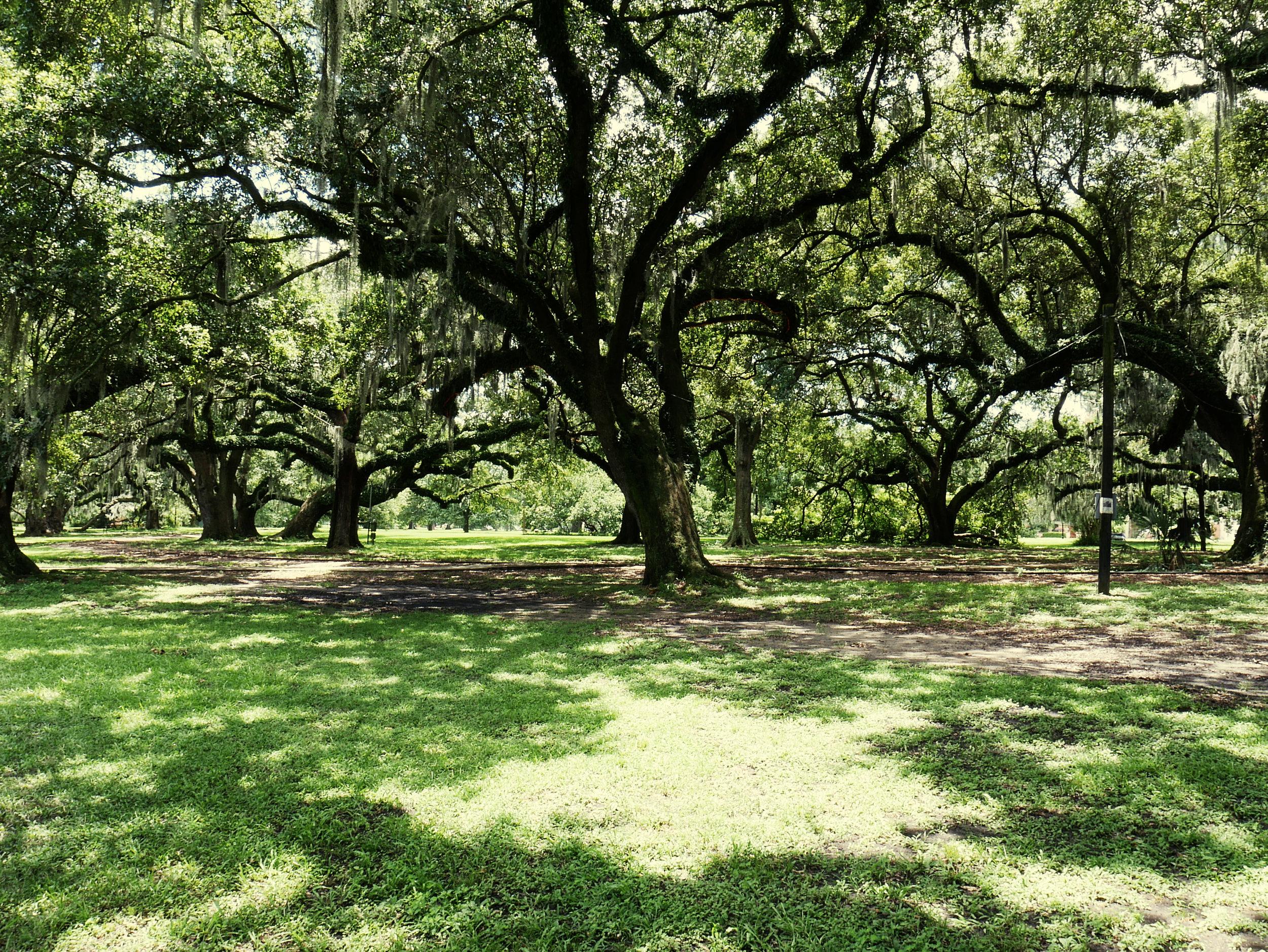 such a shady tree.jpg