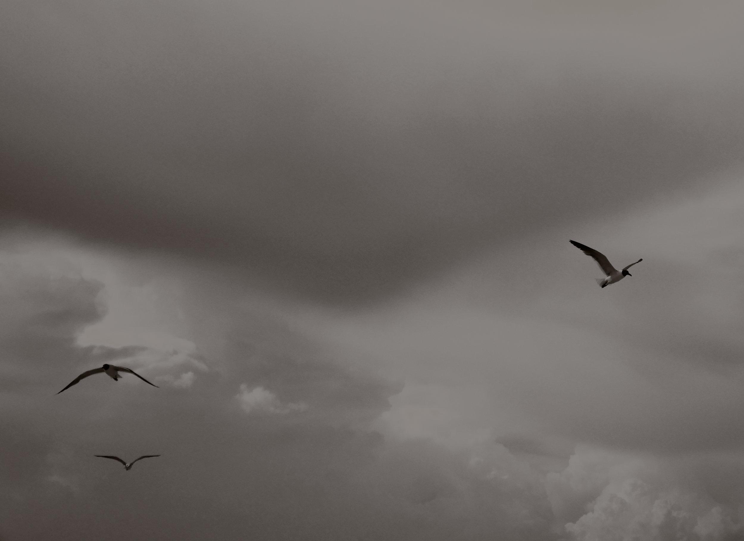 fly on.jpg
