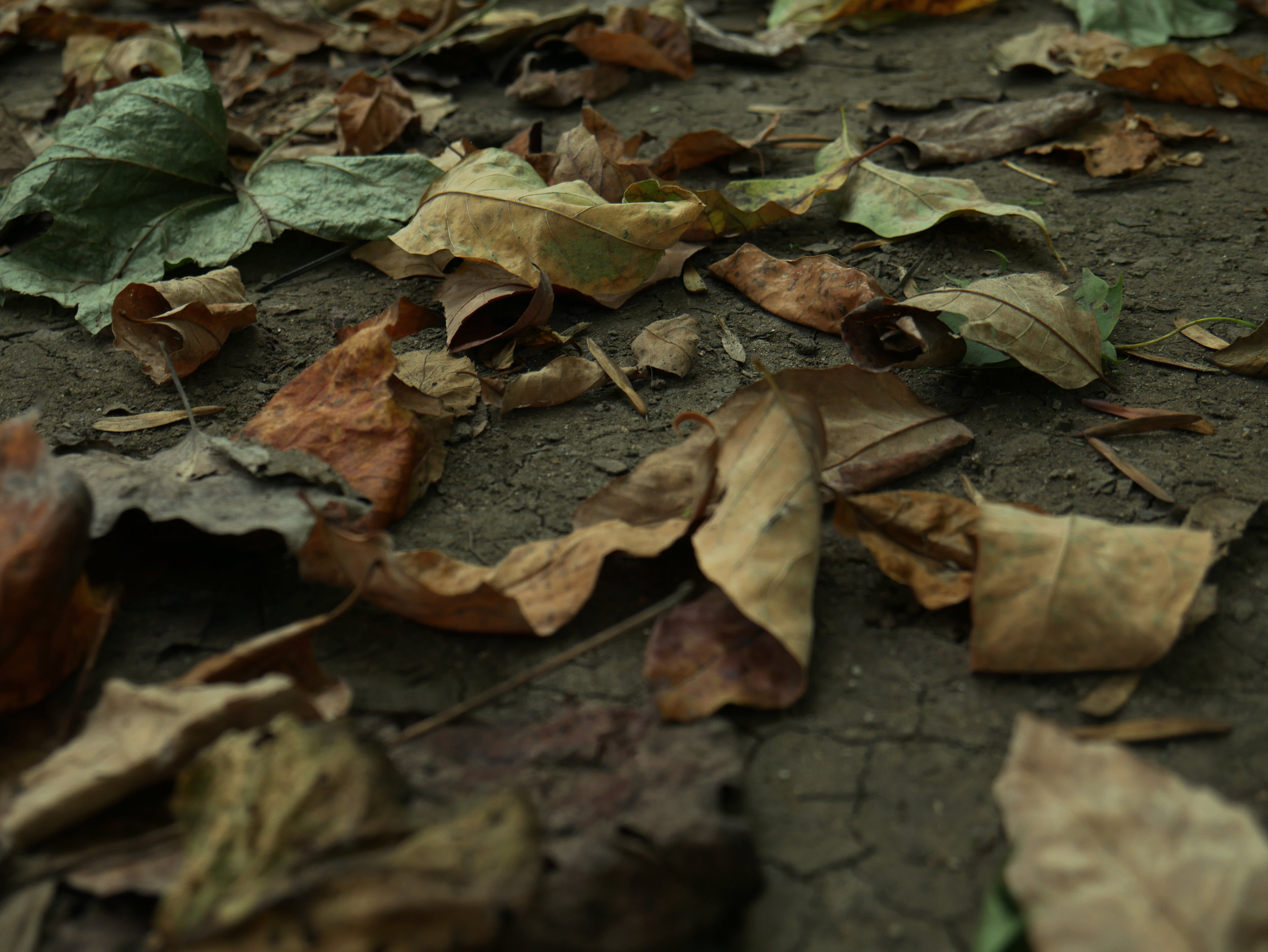 dried.jpg