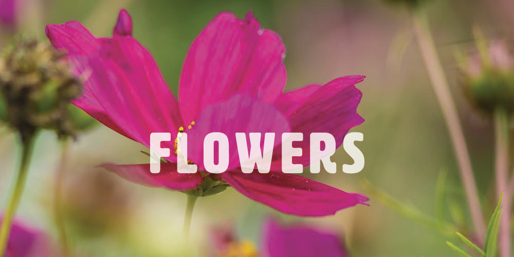 almfarms_flowers.png