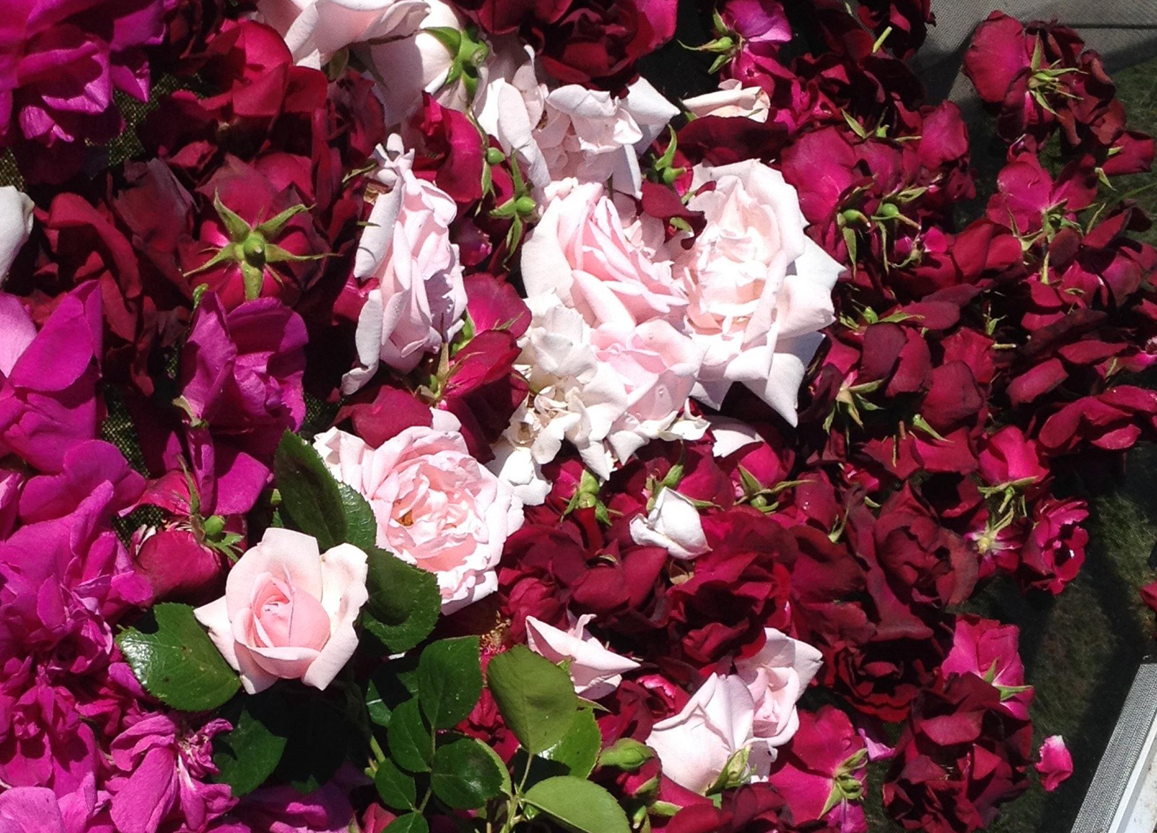 RoseHarvest-2-2016.jpg