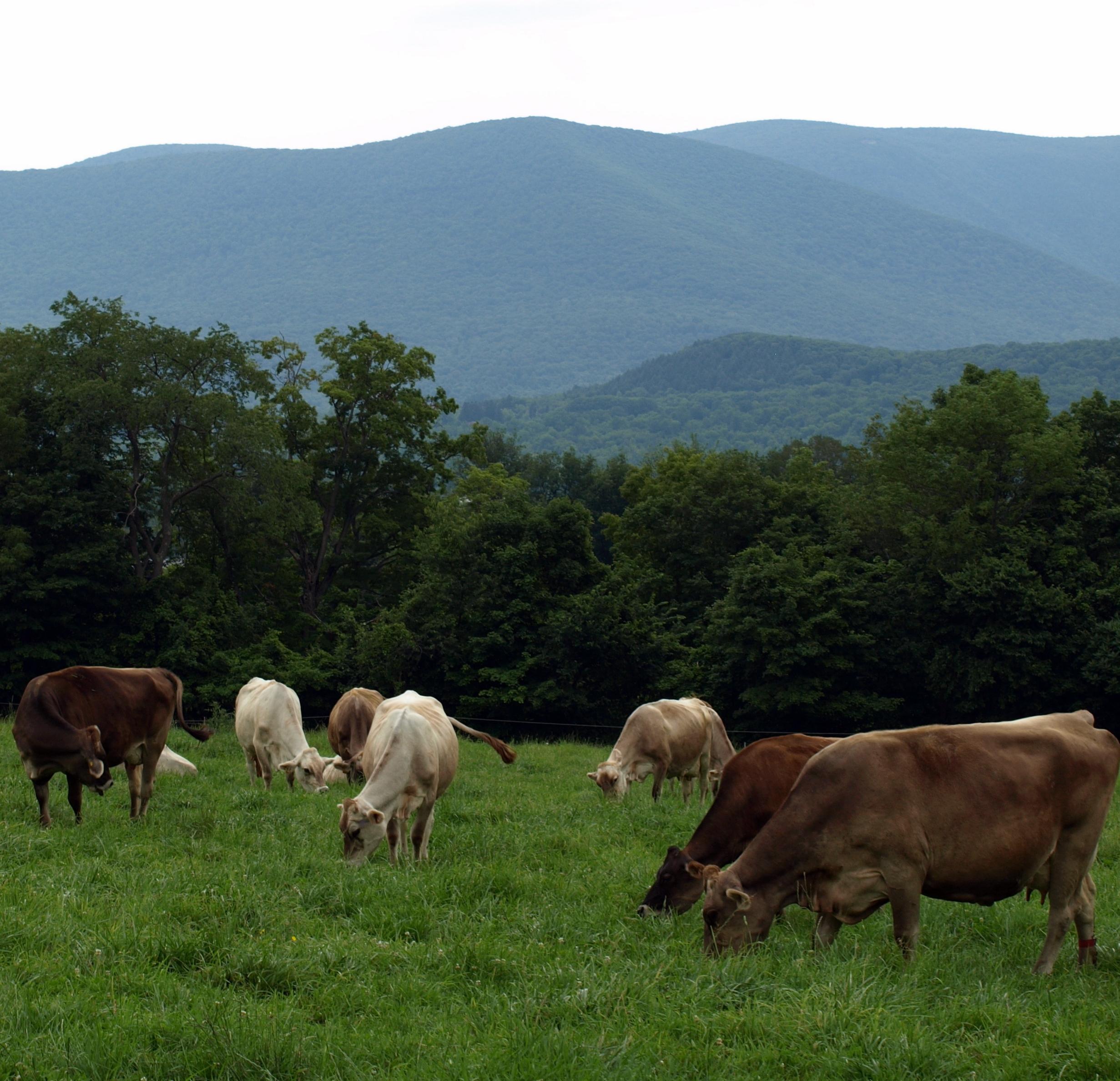 Photo credit Cricket Creek Farm