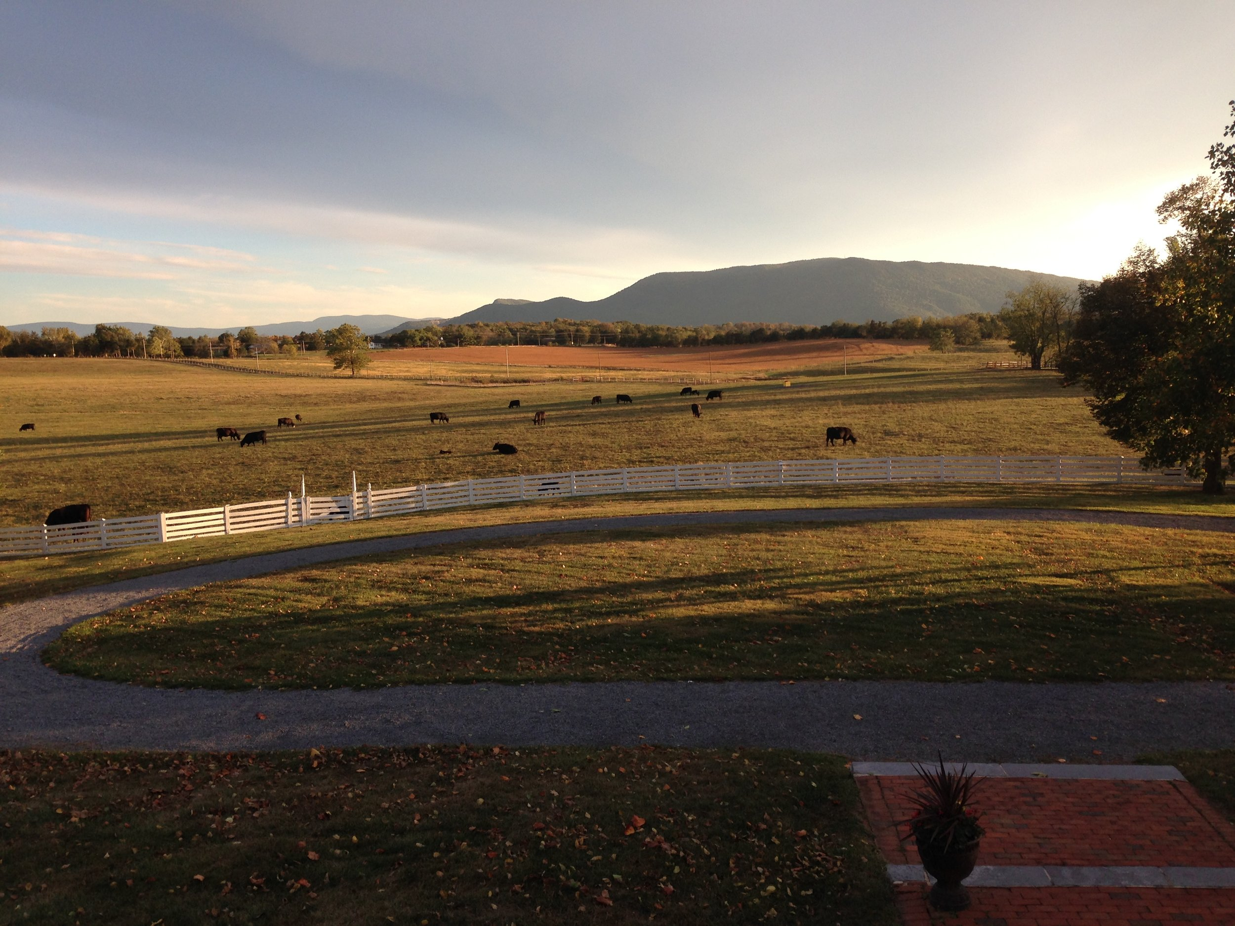 Photo credit Belle Grove Plantation.