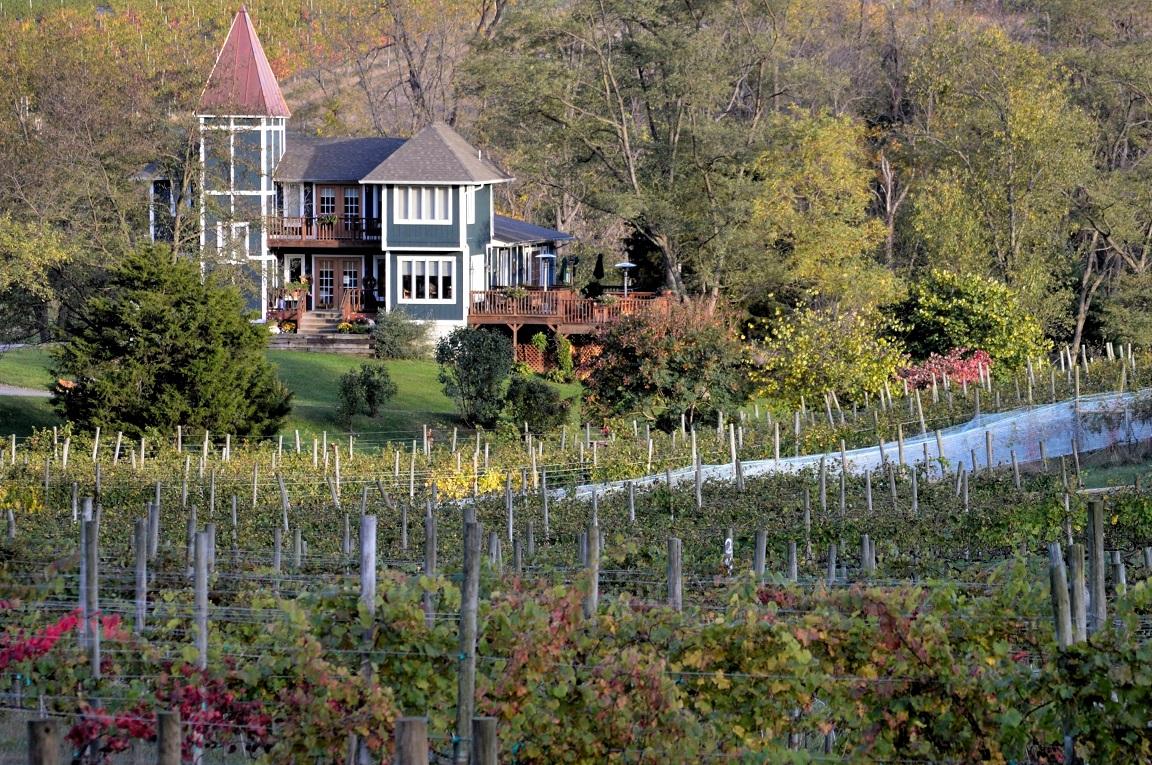 north-mountain-vineyard-tasting-room-vines.jpg