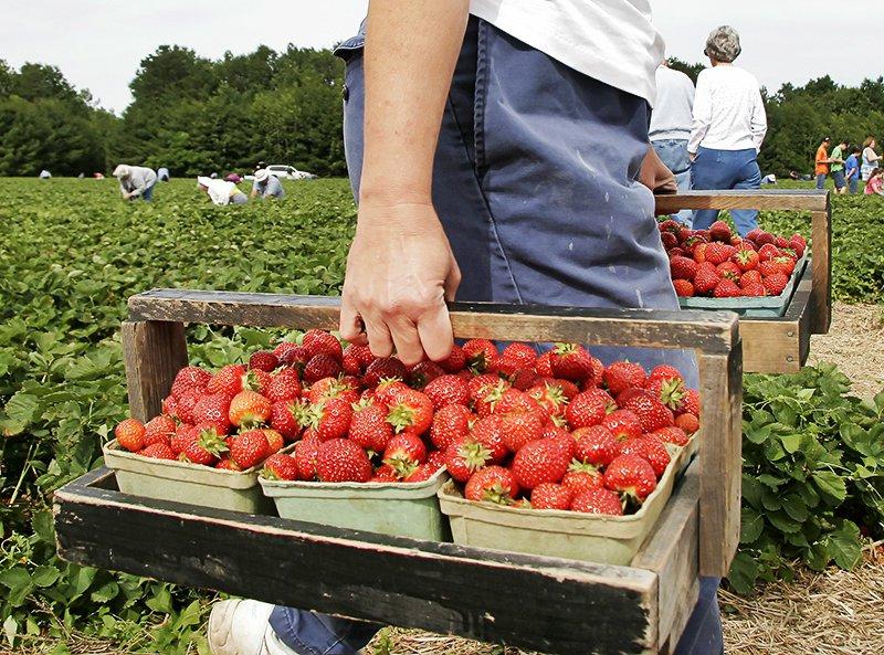 pyostraberries.jpg