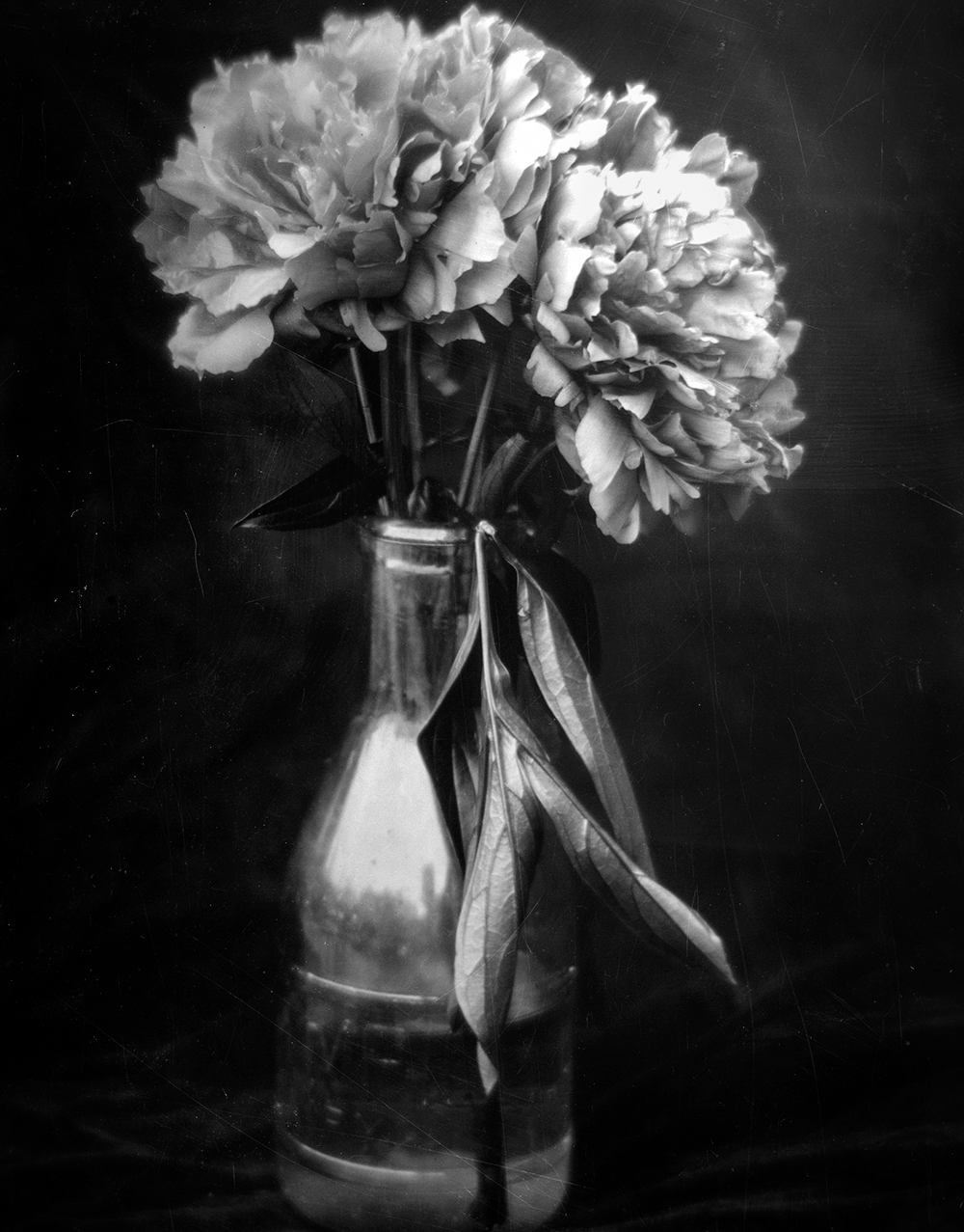 007_Flowers in Vase_16x20_Silver Gelatin Print_2013.jpg