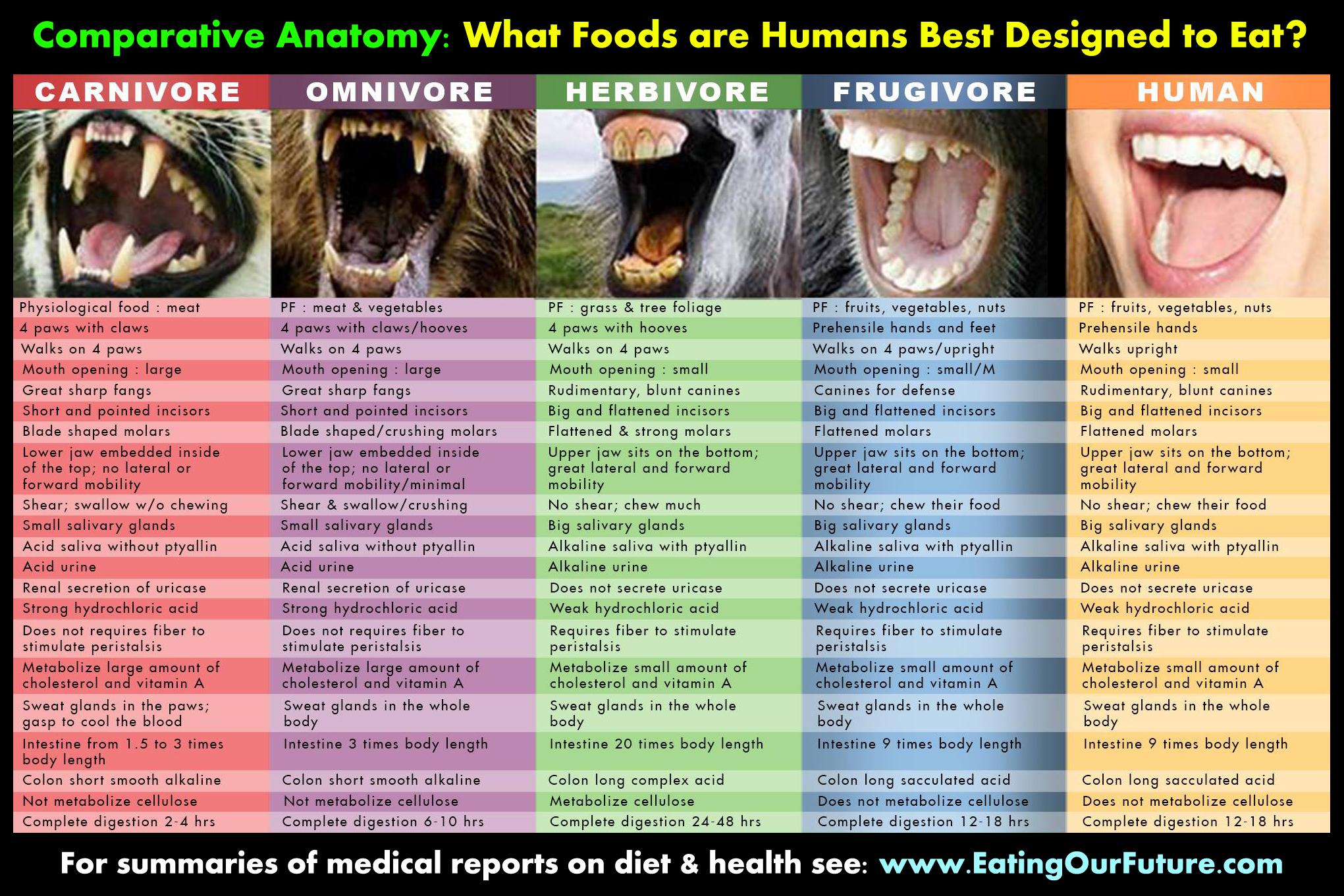 Diet of primates versus humans