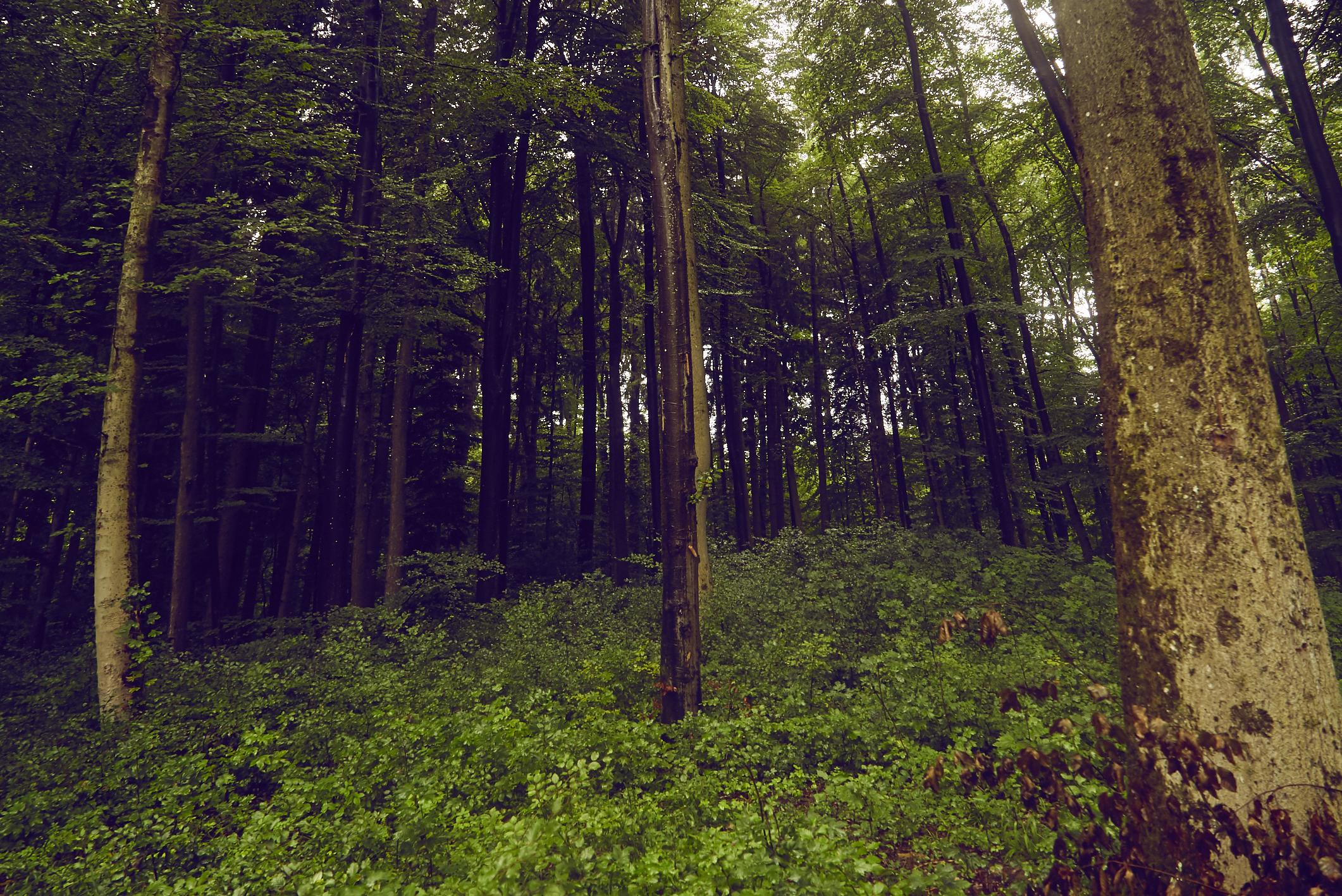 Wald_20170810-6485.jpg